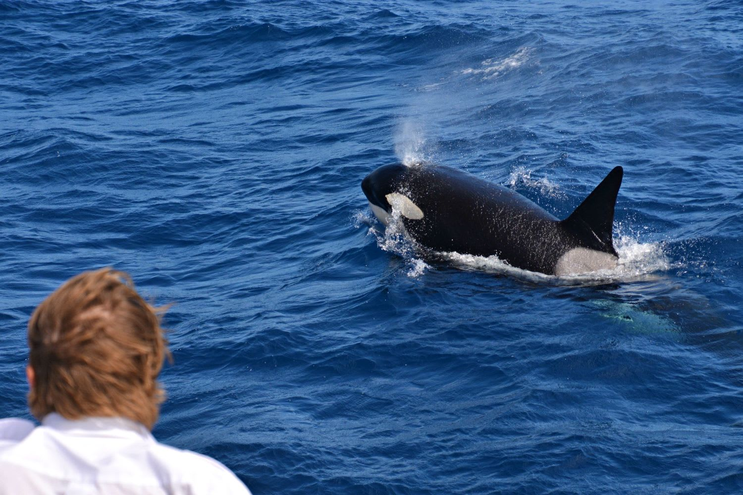 Orca Whale Watching Cruise, Full Day - Bremer Bay