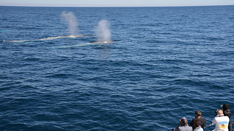 Blue Whale Watching Cruise with Lunch - Perth Canyon, Departs Fremantle