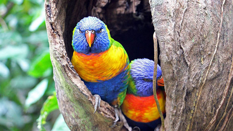 Breakfast with the Birds at Wildlife Habitat - Port Douglas