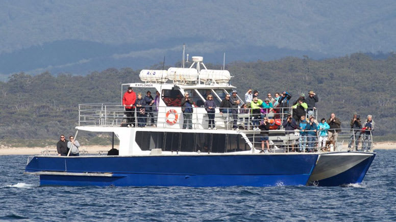 Wildlife Cruise With Afternoon Tea, 2 Hours - Sydney Harbour & Open Ocean