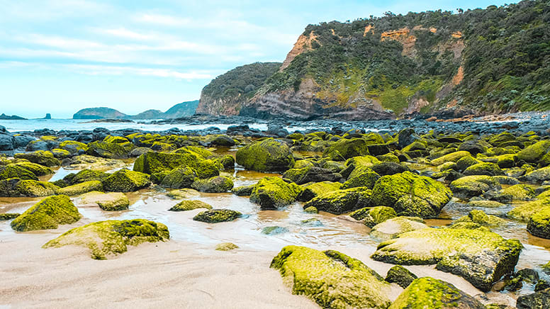 Mornington Peninsula Hike and Hot Springs Tour - Departs Melbourne