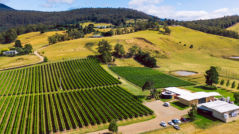 Wine Tour with Tastings, Full Day - Departs Hobart, Tasmania