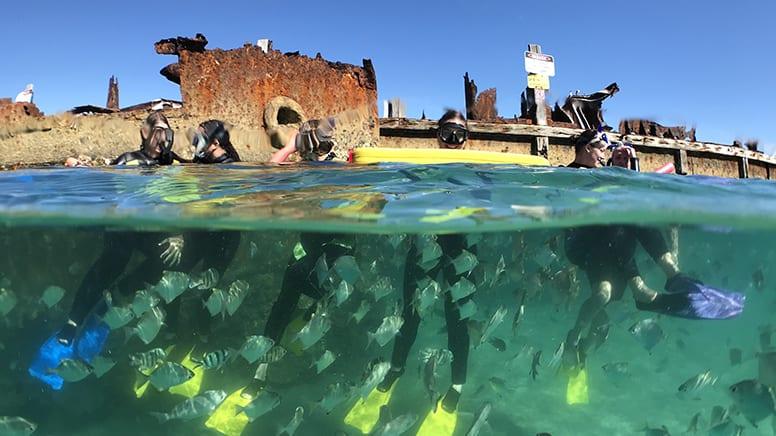Eco Adventure Cruise, Full Day - Moreton Bay, Departs Brisbane