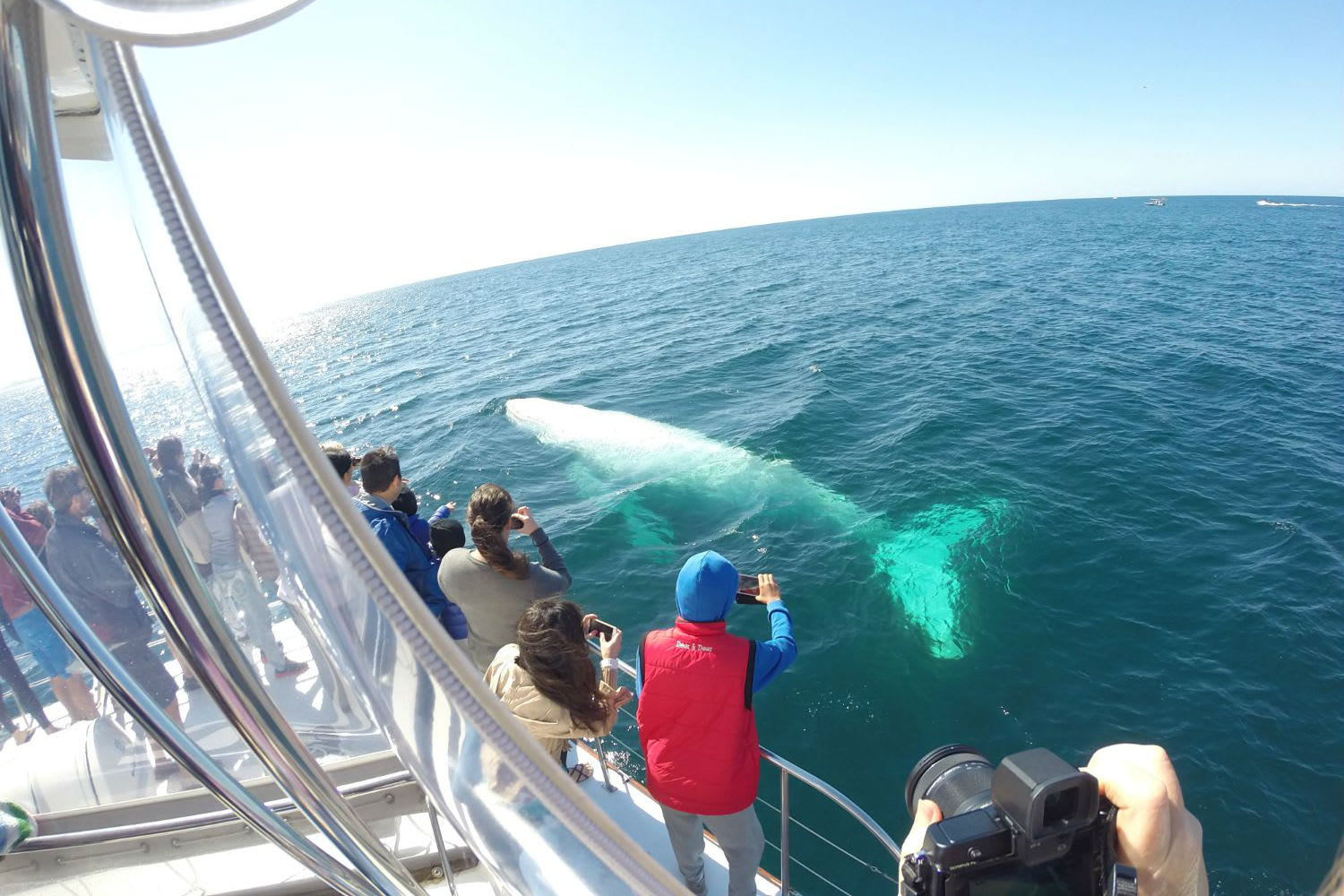 Whale Watching Cruise, 3.5 Hours - Gold Coast
