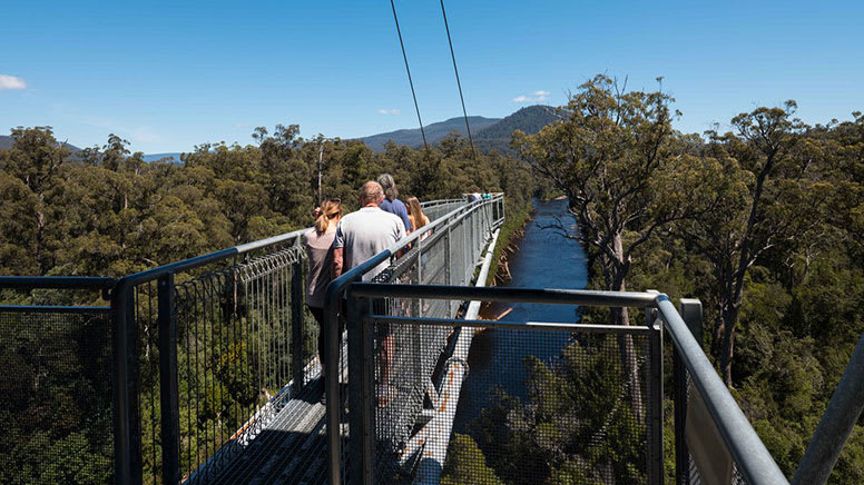 Tahune Adventures with Airwalk Admission - Hobart