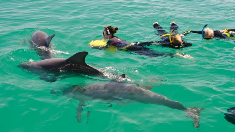 Penguin Island, Dolphin and Sea Lion Cruise, 1 Hour - Perth
