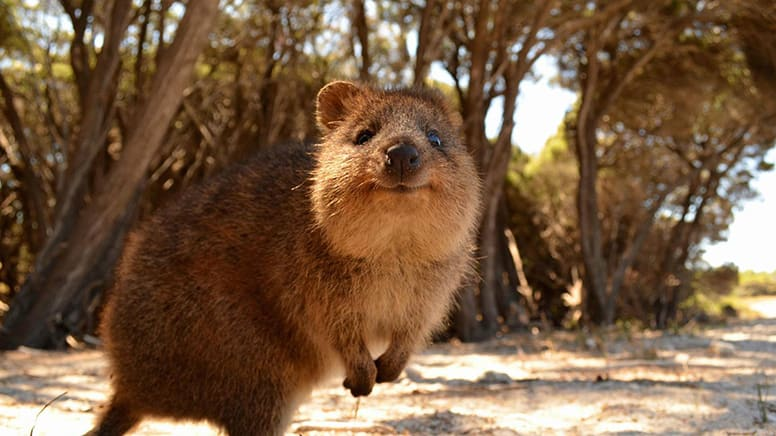 Rottnest Island Scenic Flight & Visit, Half Day – Perth - For 2