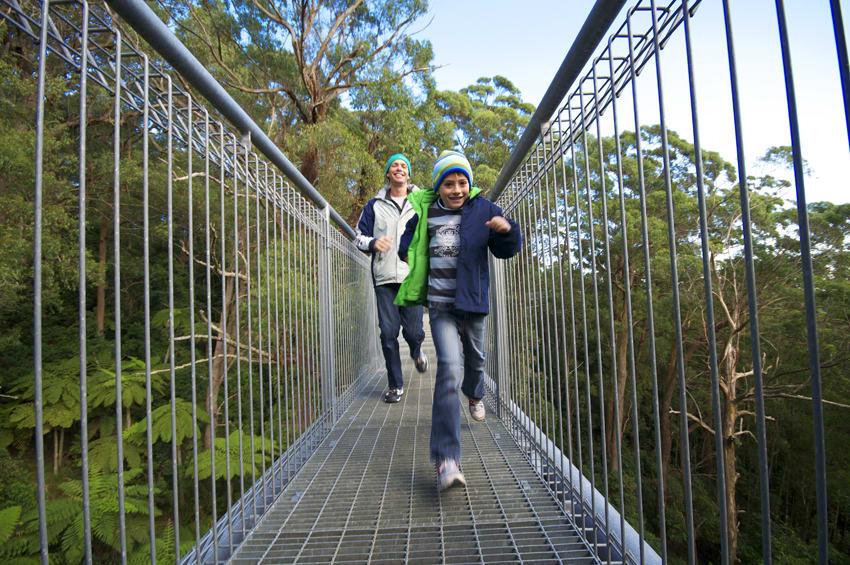Illawarra Fly Treetop Walk Experience