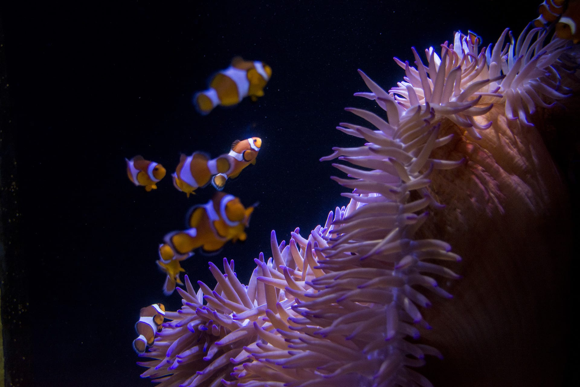 SEA LIFE Sunshine Coast Aquarium Entry