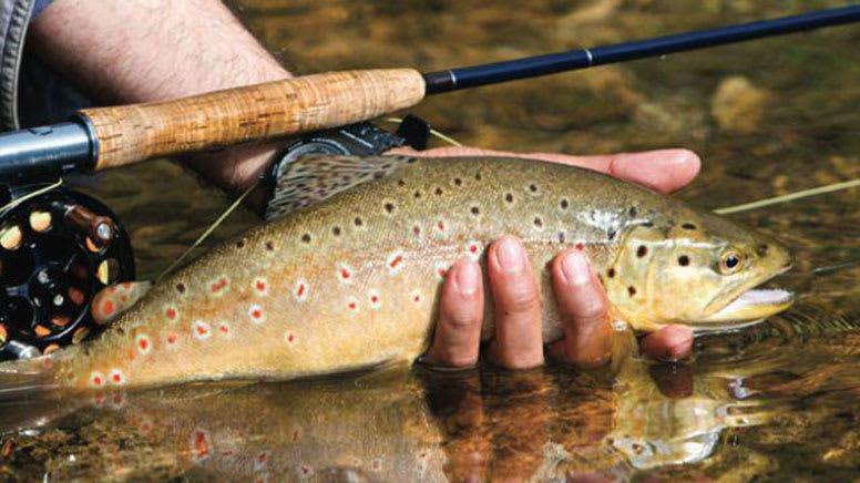 Fishing Charter, 3 Hours - Lake Wakatipu, Queenstown