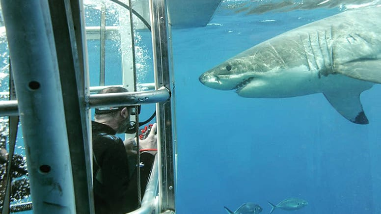 Great White Shark Sighting Experience - Port Lincoln, South Australia
