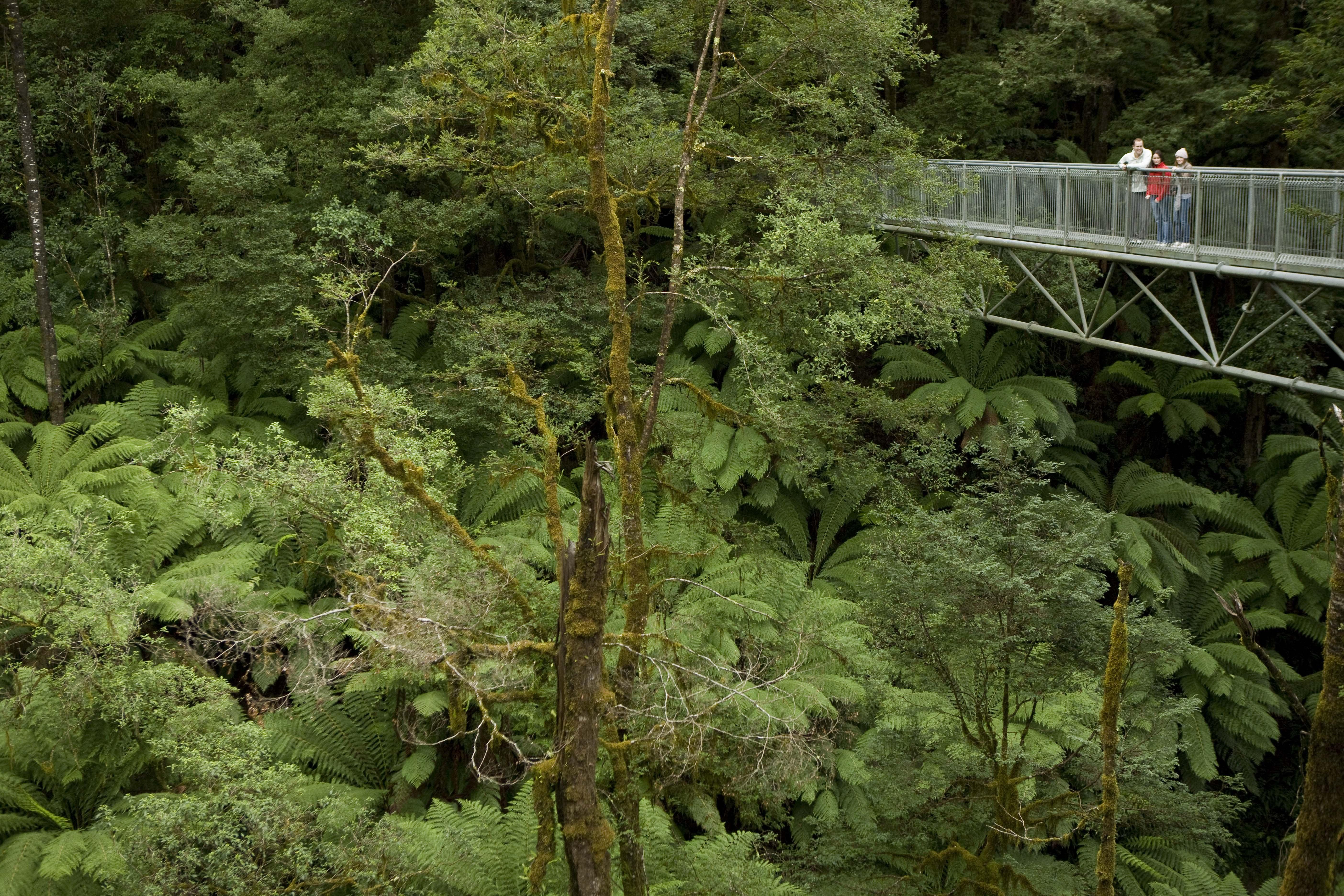 Otway Fly Treetop Adventure, Zip Line Tour - Otways