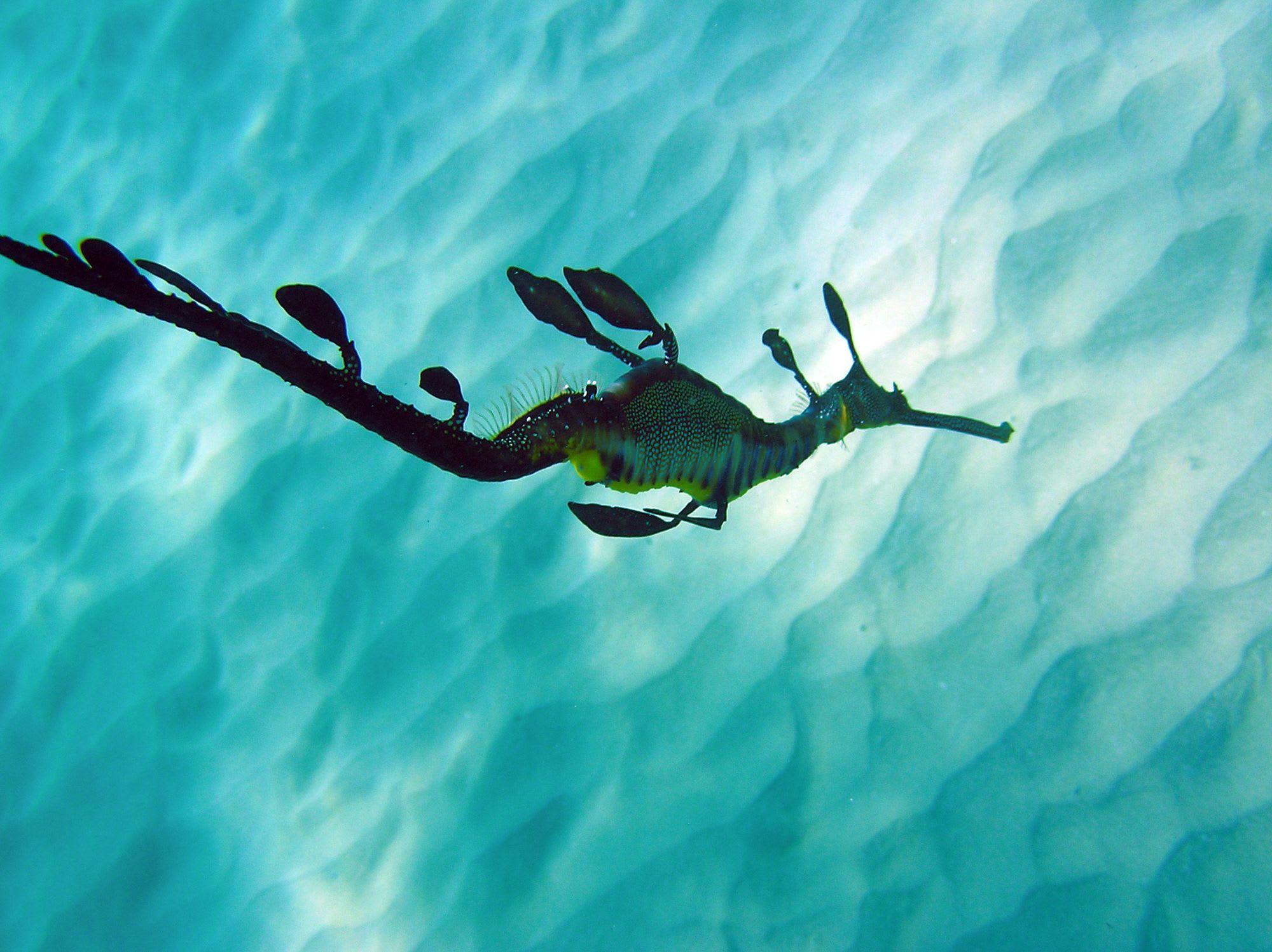 SSI Open Water Scuba Certification Weekend Course - Port Phillip