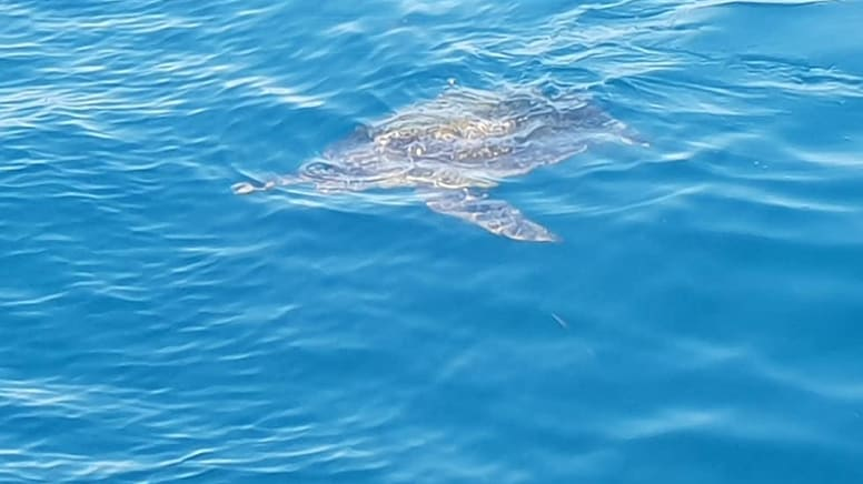 Snorkelling with Turtles Tour - Cook Island, Gold Coast