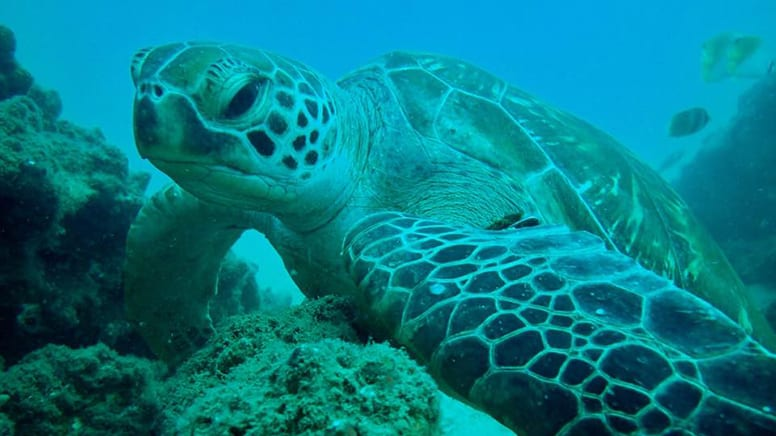 Introductory Scuba Diving with Turtles - Cook Island, Gold Coast