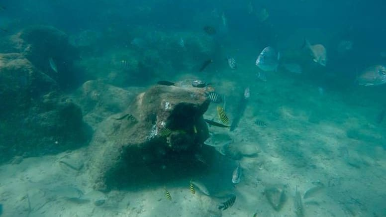 Certified Scuba Diving with Turtles - Cook Island, Gold Coast