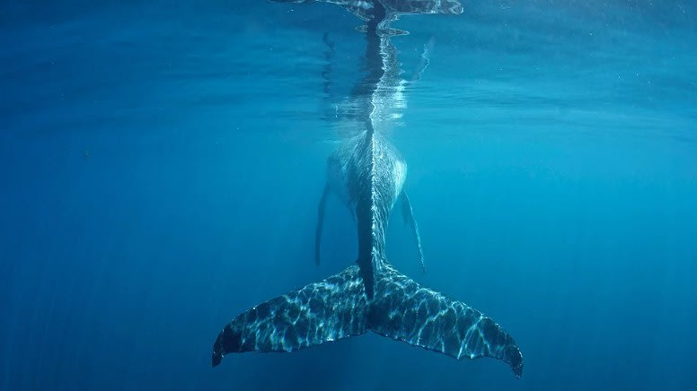Swim with Humpback Whales, Full Day Snorkel Tour - Ningaloo Reef