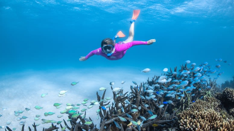 Glass Bottom Boat Turtle Viewing & Snorkel Tour, 3 Hours - Coral Bay