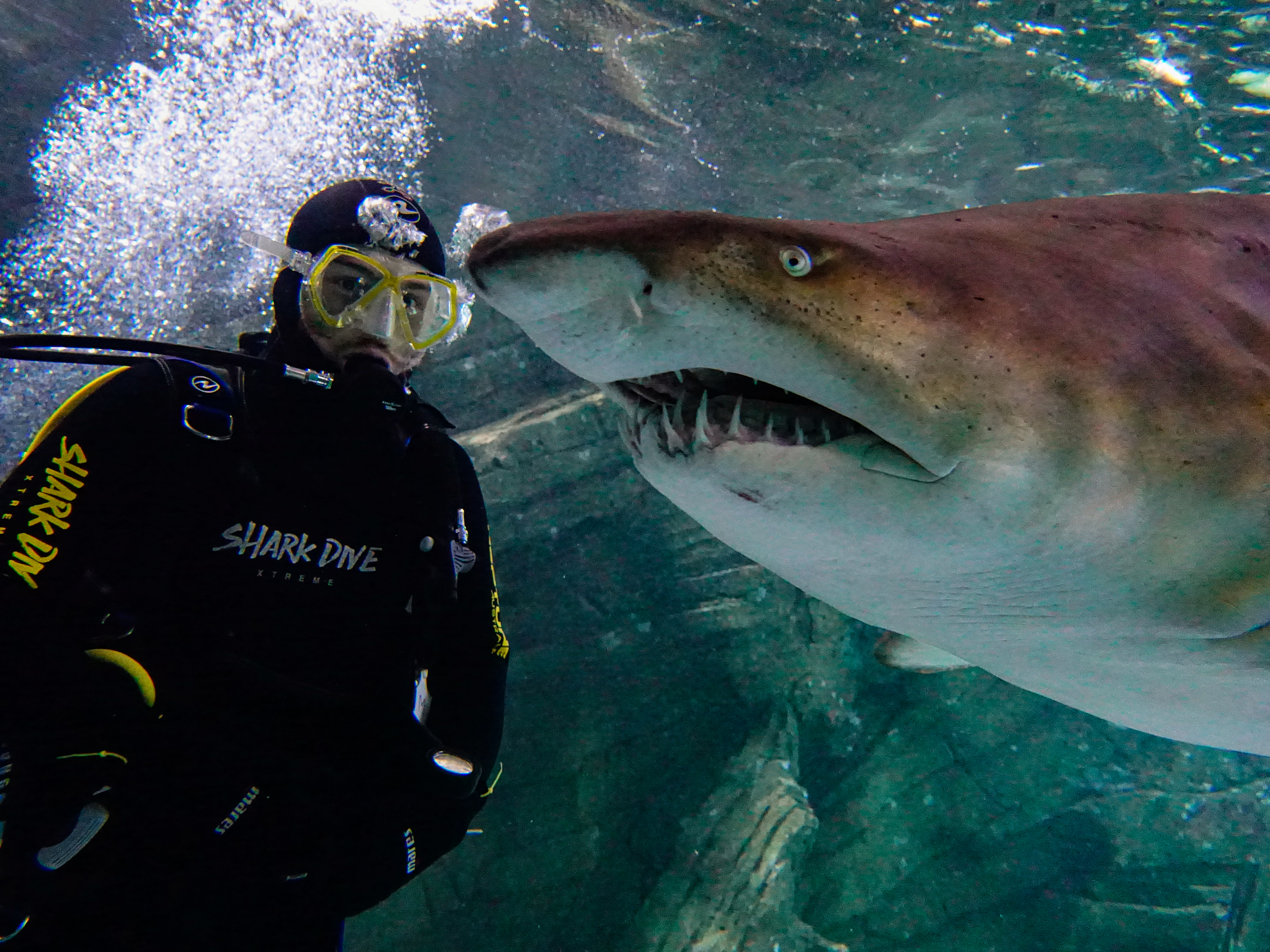 Dive With Sharks - Sunshine Coast SEA LIFE Aquarium
