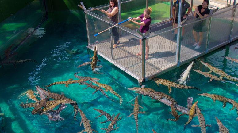 Crocosaurus Cove Entry For 1 - Darwin