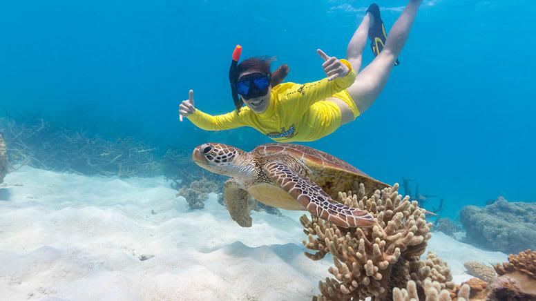 Great Barrier Reef Snorkelling Safari, Afternoon - Cape Tribulation