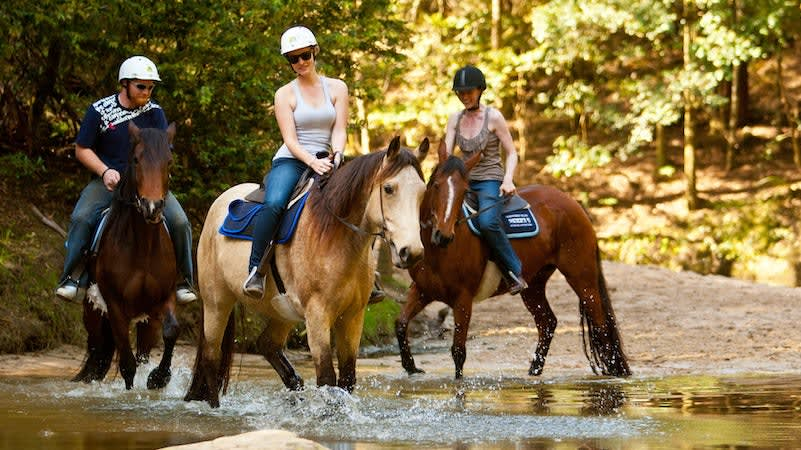 Horse Riding Adventure, 2 Hours Guided or Free Range - Sydney