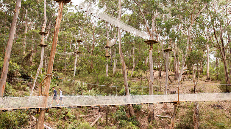 High Ropes Adventure Course, 2 Hours - Lorne