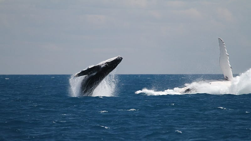 Afternoon Whale Watching Cruise, 3 Hours - Hervey Bay, Queensland