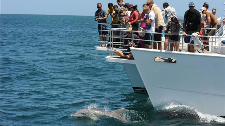 Dolphin Spotting Cruise, 90 Minutes - Jervis Bay