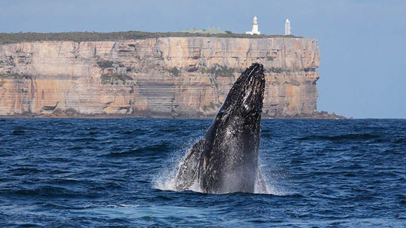 Whale Watching Cruise, 2 Hours - Jervis Bay