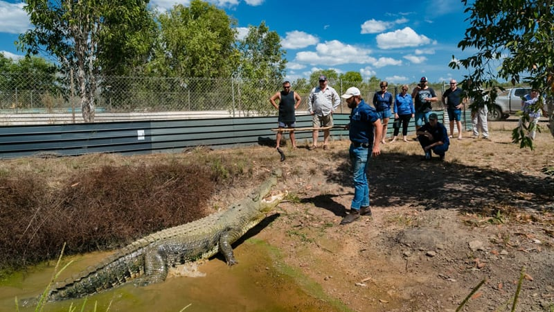 Top End Helicopter, Cruise & Croc Encounter Day Tour - Darwin