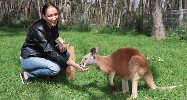 Cleland Wildlife Park Adventure Tour Adelaide