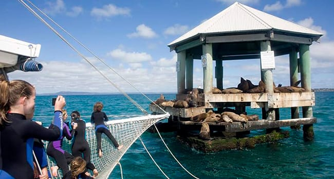 Seal Cruise Phillip Island