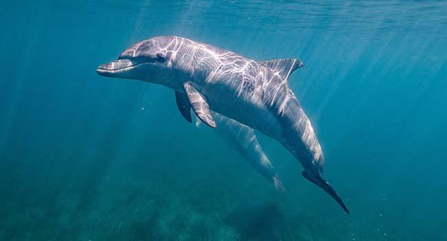 Swim with Dolphins and Seals – Mornington Peninsula