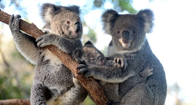 Taronga Zoo and Sydney Harbour Cruise