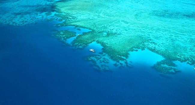 Low Isles cruise