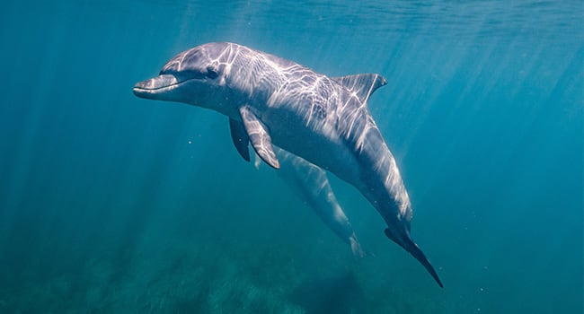 Swim with dolphins and seals