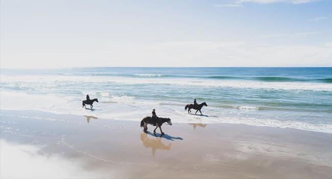 Horse Trail Ride along the beach , Byron Bay