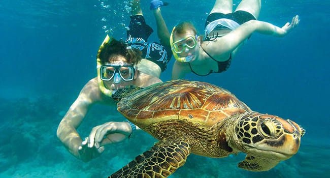 Snorkelling for 1 day on the Reef