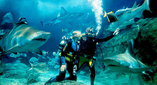 Dive with sharks in Melbourne