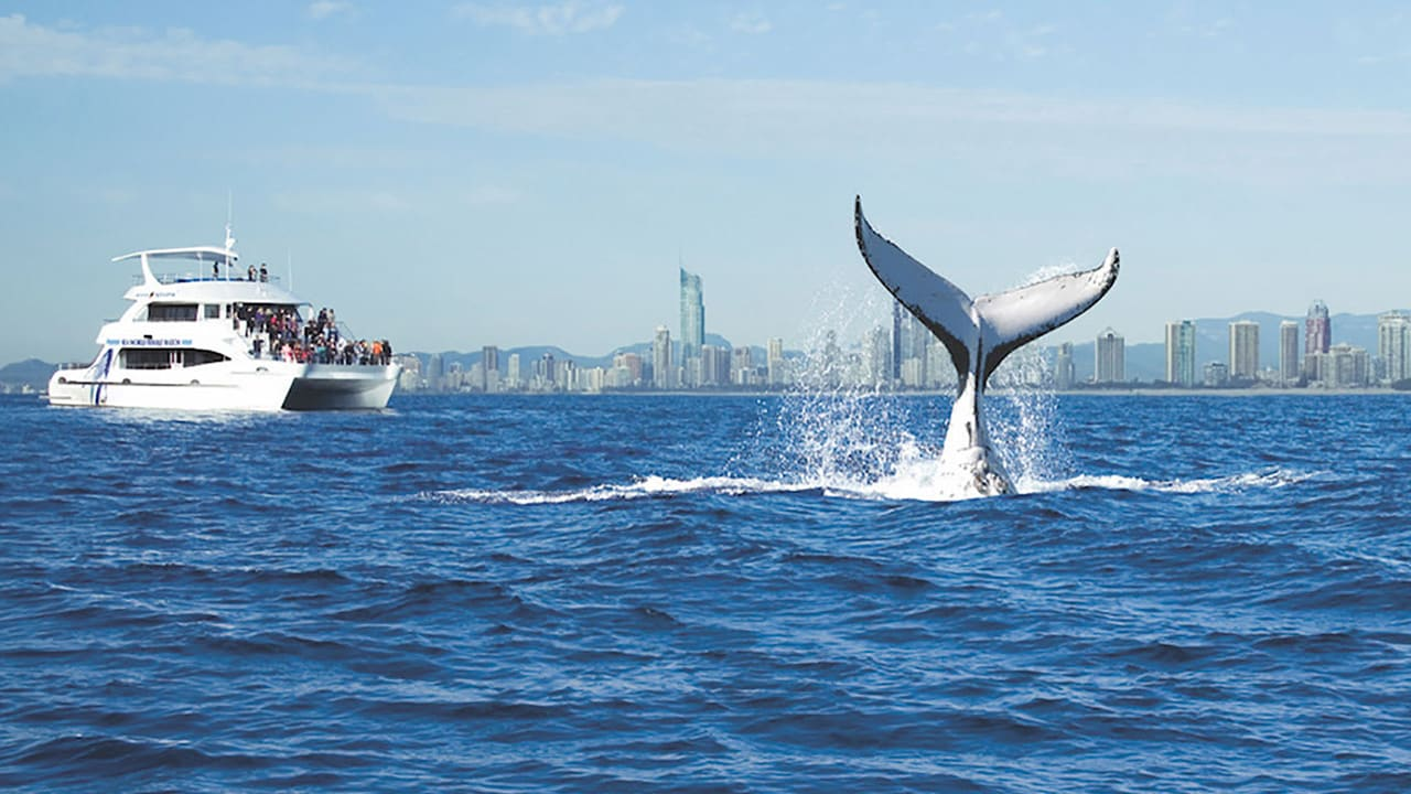 Things to do as a family on the Gold Coast