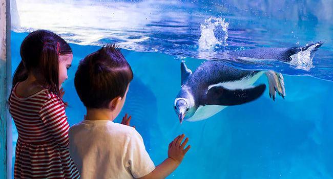 SEA LIFE Aquarium tickets