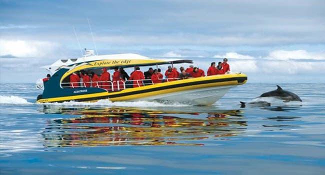 Wildlife cruise, Hobart
