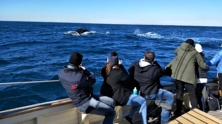 Tall Ship Whale Watching Cruise, 5 Hours - Sydney