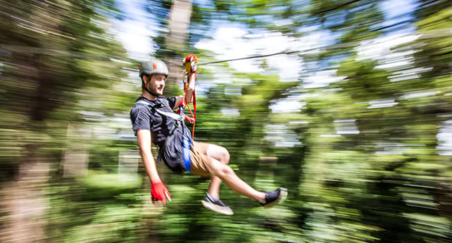Flying fox and tree adventures