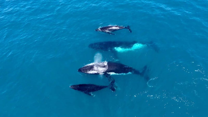 Whale Watching Cruise, Weekends, 2 Hours - Perth