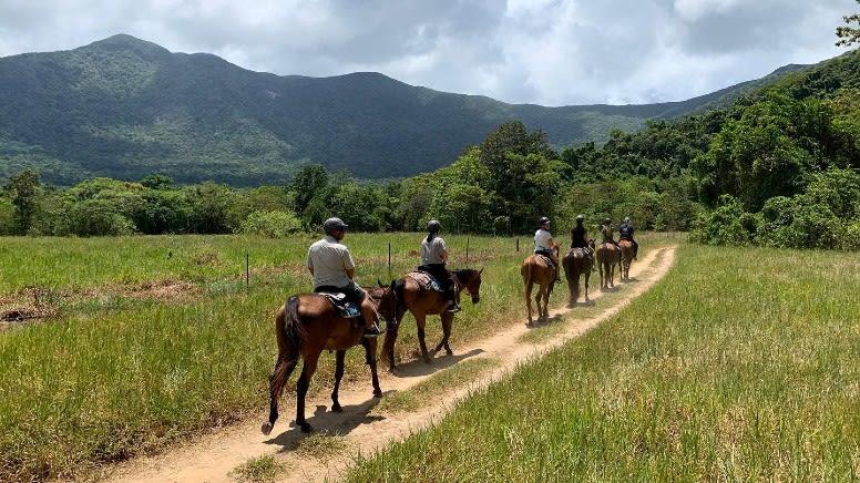 Rainforest Horse Ride & Swim, 2 Hours - Cape Tribulation
