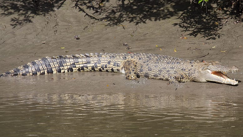 Crocodile Watching Cruise & Full Day Adventure - Airlie Beach