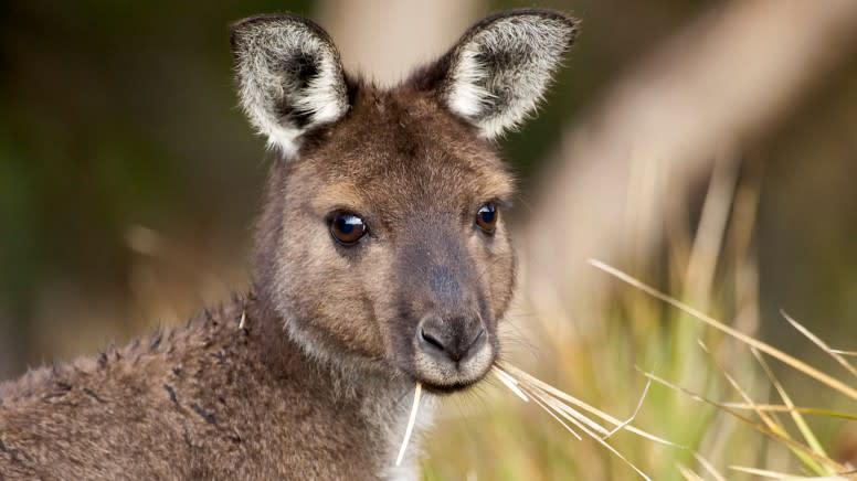 Sunset Walking Tour, 2 Hours - Kangaroo Island