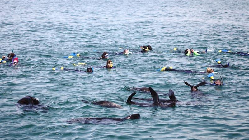 Swim With Dolphins & Seals - Mornington Peninsula